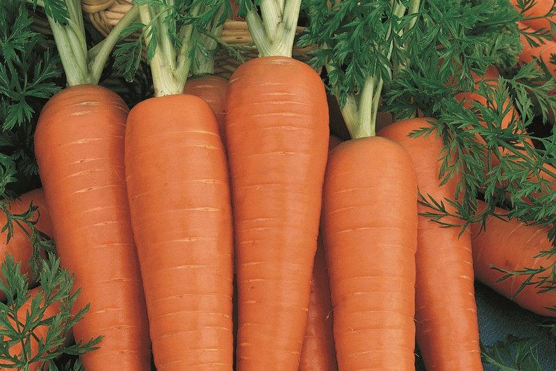 गाजर खाँदा हुने फाइदा