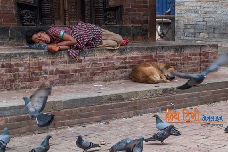Sheltering street dogs to combat rabies