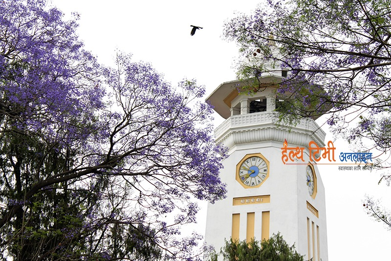 1. A vulture flying above GhantaGhar (Nepal's first public tower clock, built by Bir Shumsher) between two blossomed Jacaranda flower trees